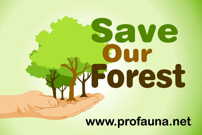 save our wildlife and forest for Sixty-percent of at-risk wildlife depends on private and family forests for habitat   on the ground, is helping support forest owners protect our wildlife species,.