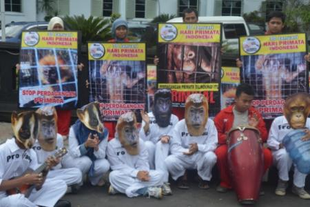 Indonesian primate day celebration