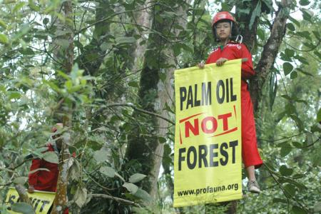 ProFauna Opposes Government's Initiative to Reclassify Palm Oil Plantations as Forests