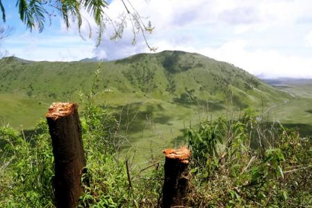 Illegal Logging in Bromo Tengger Semeru National Park Must Stop
