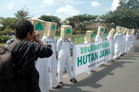 Forests in Java are Threatened, ProFauna Calls For Forest Protection Movement