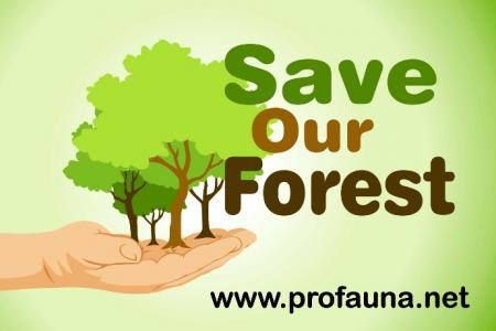 Save Our Forest