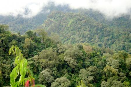About Forests in Java