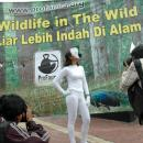 Campaign against wildlife trade