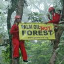 ProFauna's campaign against government's plan to enlist palm oil plantation as forest.