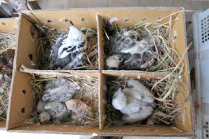 Government of Bali and ProFauna Indonesia Arrested International Wildlife Syndicate