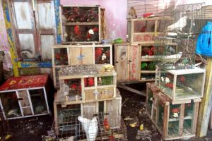 The condition of the confiscated birds