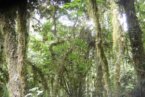 One of the remaining tropical rain forest in Java Island