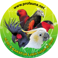 Parot More Beautiful in The Wild