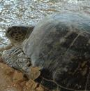 Sea Turtle Observation Guidelines