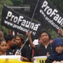 ProFauna's Activists Jazzed Up Surabaya's Car Free Day
