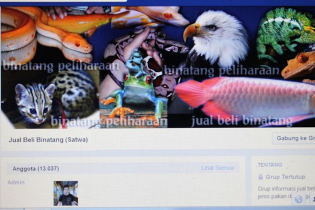 Menyambut Baik Pelarangan Jual Beli Satwa Di Facebook Profauna