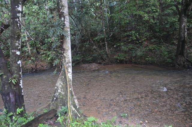 Inilah Hubungan Mesra Antara Hutan Dan Ketersediaan Air Profauna