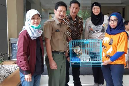 Penyerahan sukarela kukang di Bandung