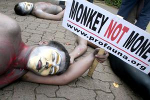 Primate Campaign